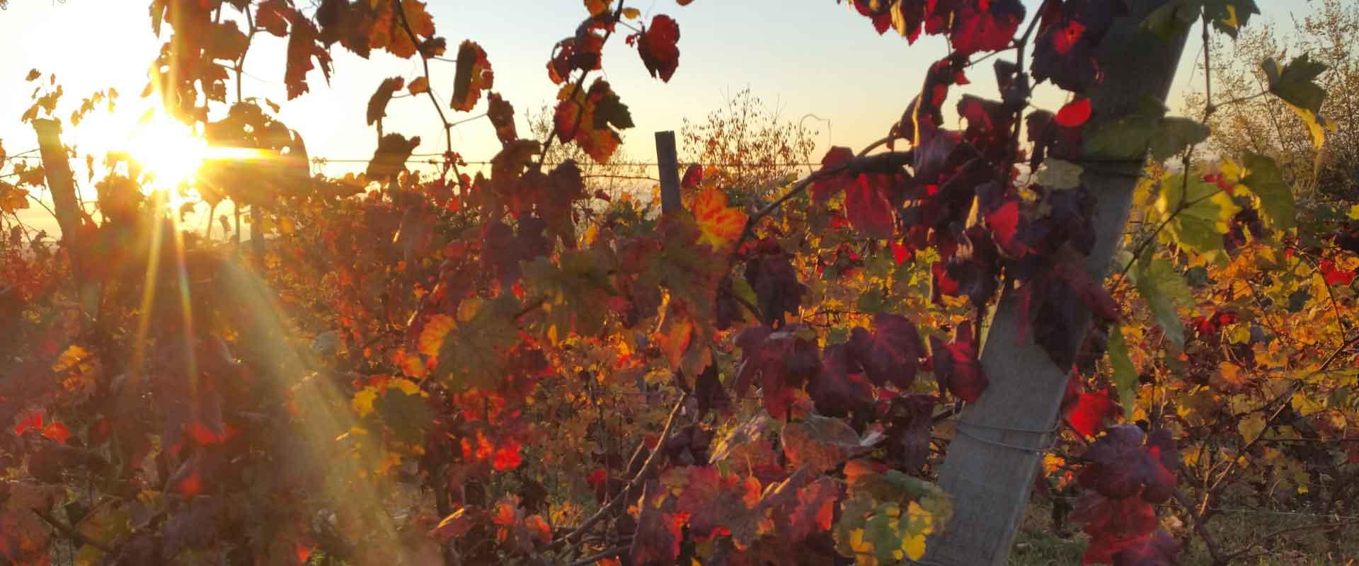 Sentieri tra le vigne