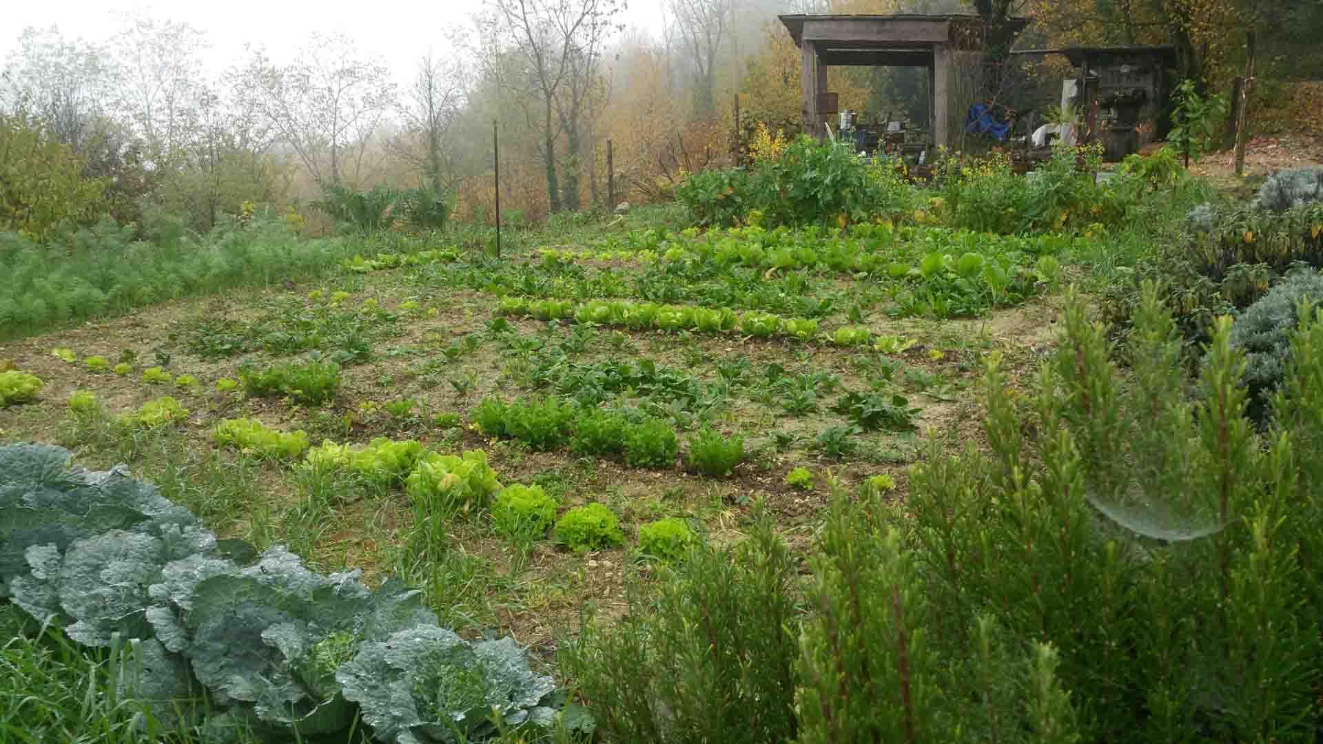 Orto autunnale verdure orto-terapia orto-condiviso B&B & Meditation Center Zorba Il Buddha Passerano Marmorito AT