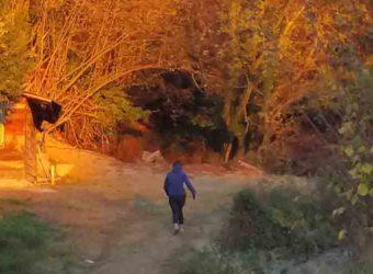 Shinrin-Yoku: Il Bagno Di Foresta: Dal Giappone Una Pratica Di Puro Contatto Con La Natura