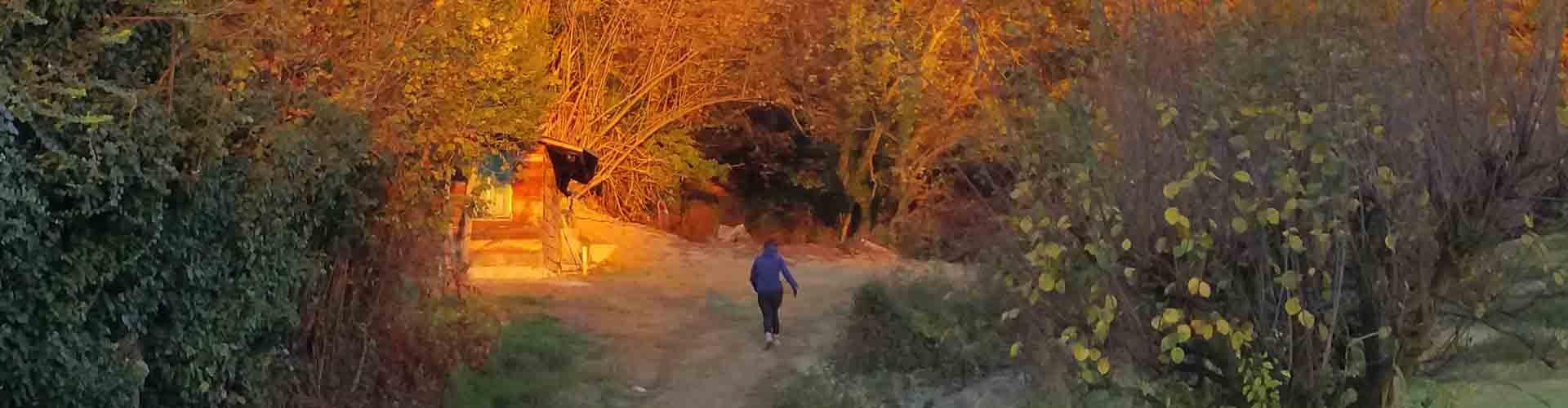 Shinrin-Yoku Bagno Di Foresta