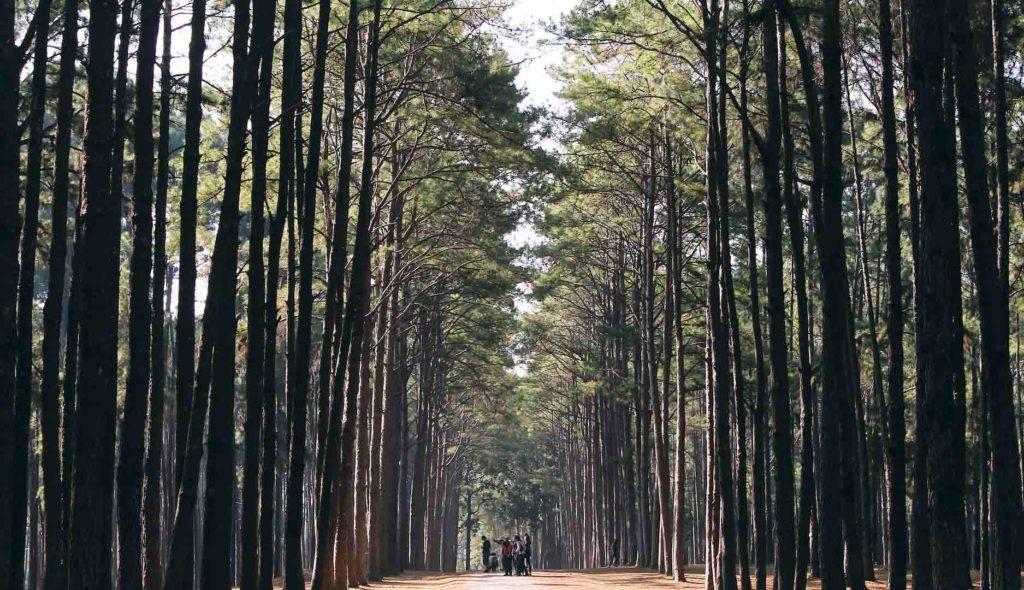 Percorso Shinrin-Yoku bagno di foresta 6 persone meditazione B&B & Meditation Center Zorba Il Buddha Passerano Marmorito (AT)